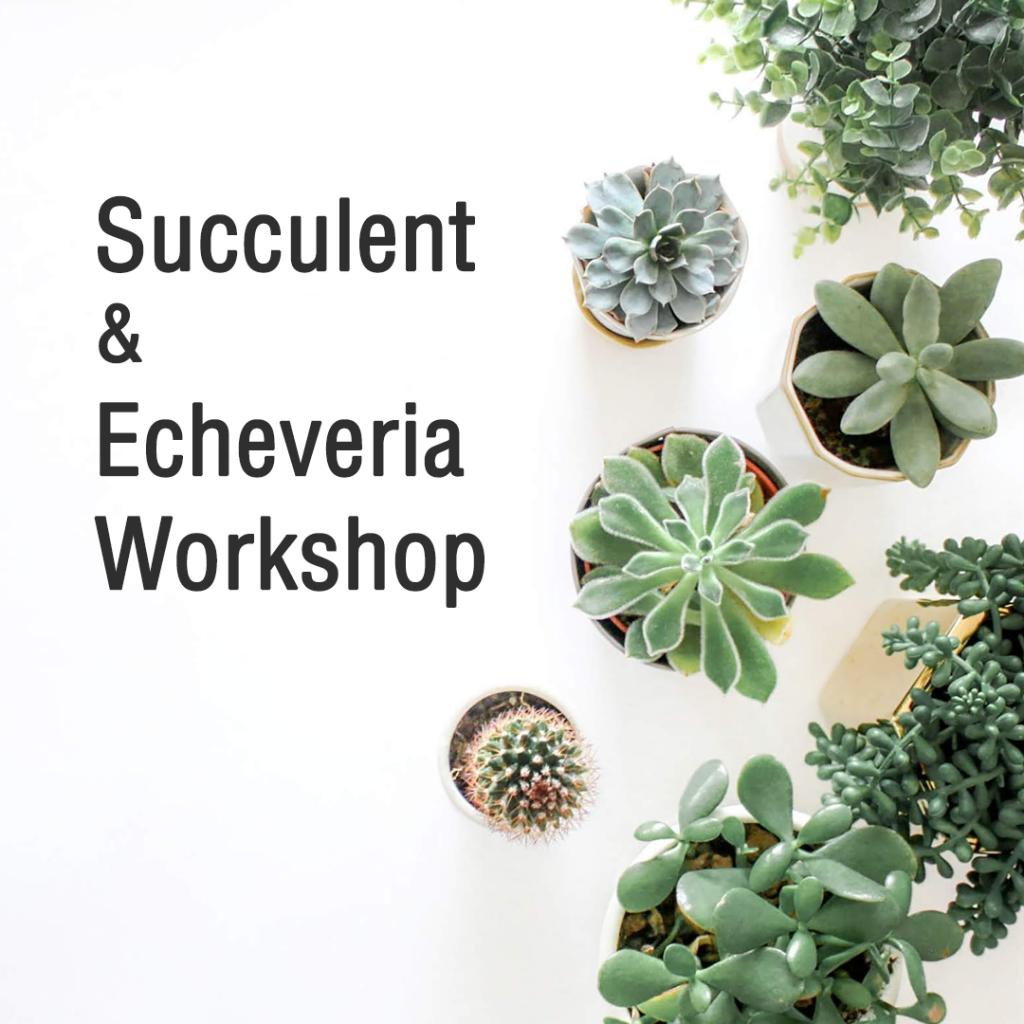Succulent & Echeveria Planting Workshop